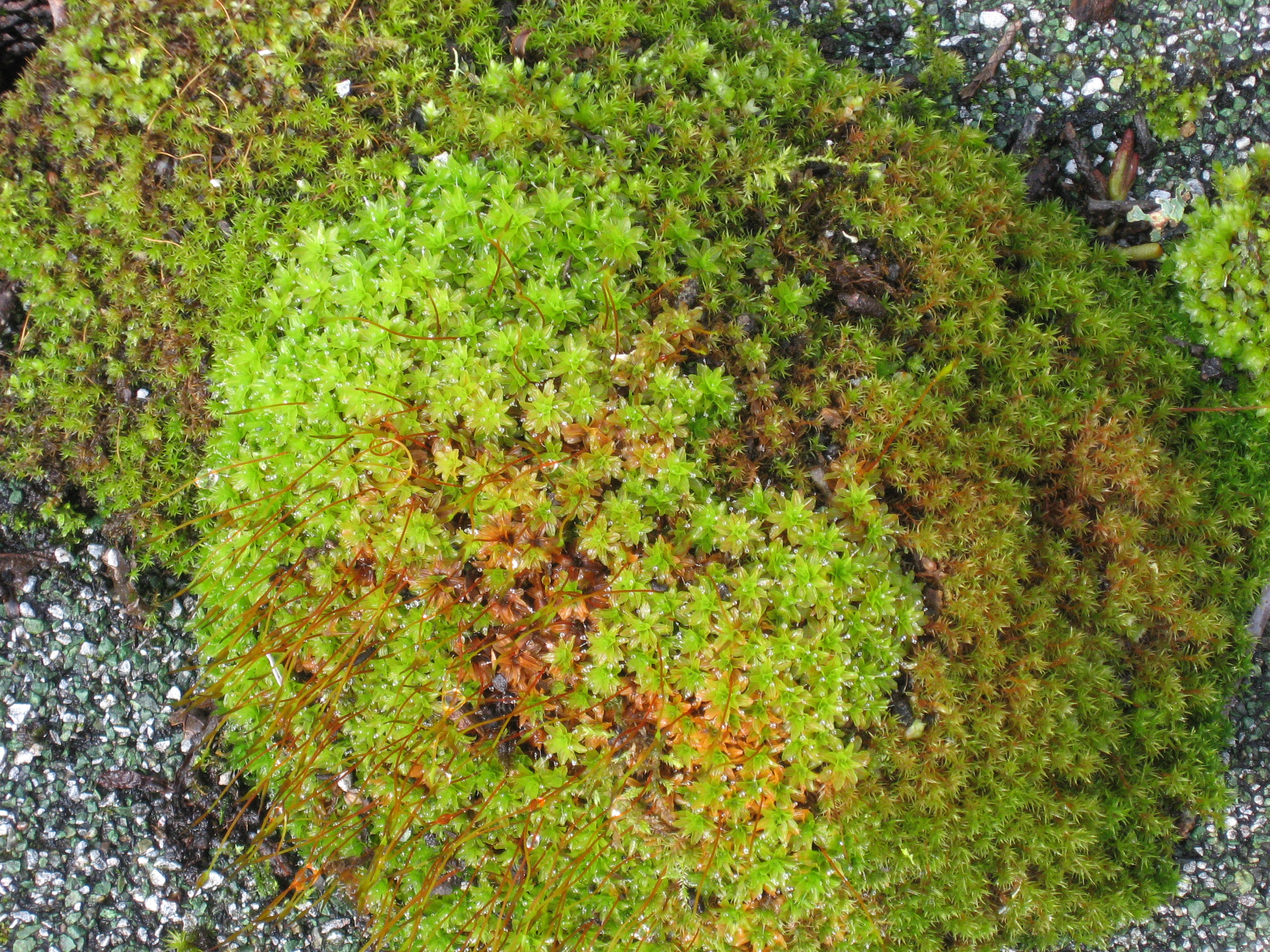 Up On The Roof A Place Where Moss Thrives Btweenblinks
