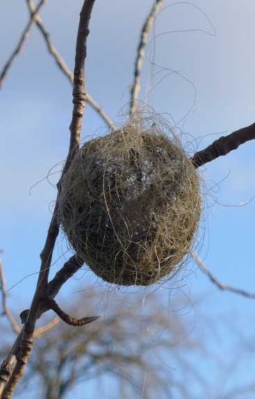 Fishing Line Nest